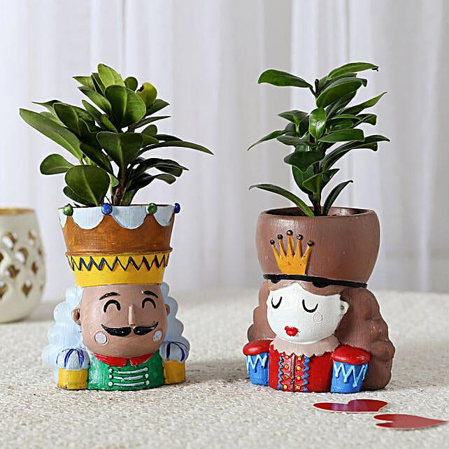 Set of 2 Ficus Compacta In King Queen Pots: