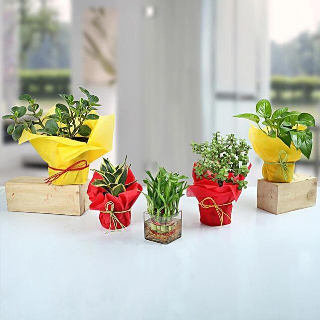 Set of 5 Fantastic Indoor Plants: Office Desk Plants