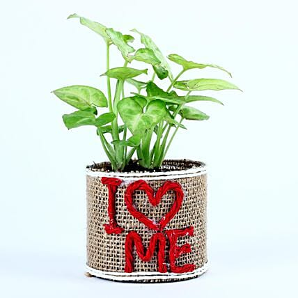 Syngonium Plant In Glass Vase: Singles Day Gifts