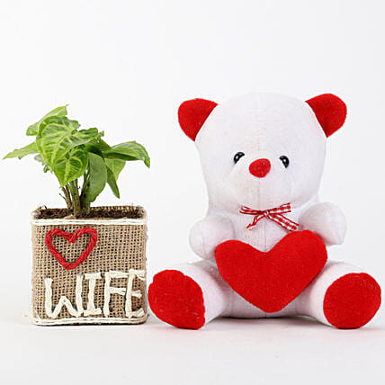 Syngonium Plant in Love Wife Vase With Teddy Bear: