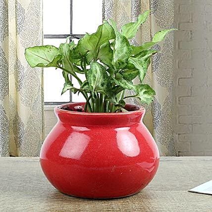 Syngonium Plant With Red Vase: Foliage Plants