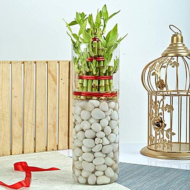 Three Layer Bamboo Decor Terrarium: Exotic Plant Gifts