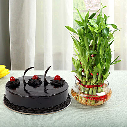 Truffle Cake N Three Layer Bamboo Plant: Buy Indoor Plants