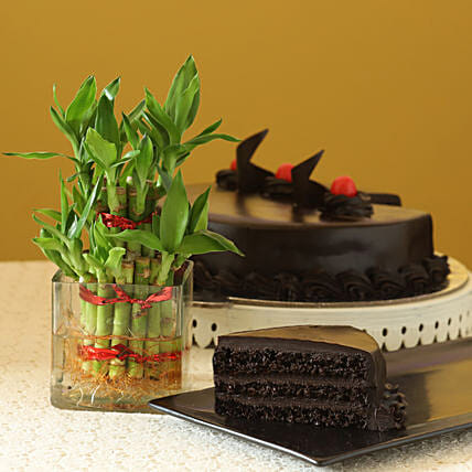 Truffle Cake N Two Layer Bamboo Plant: Cakes for Valentines Day