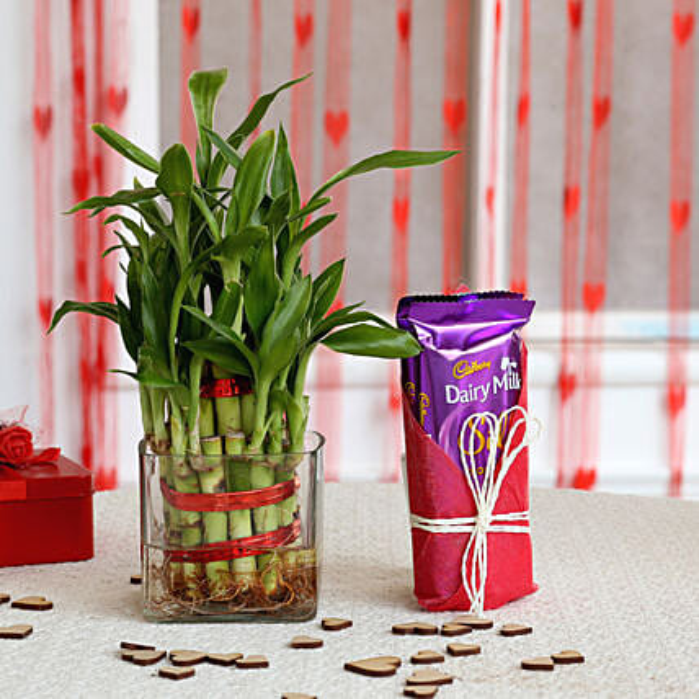 Two Layer Bamboo Plant & Dairy Milk Silk Chocolates: