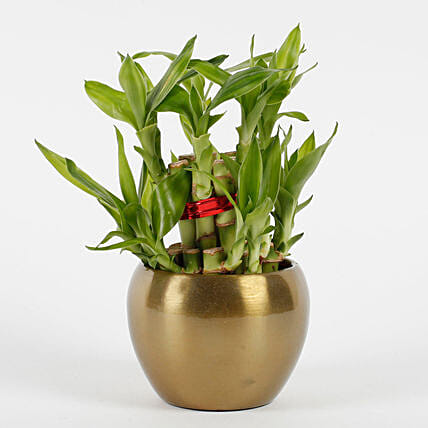 Two Layer Bamboo Plant in Copper Orchid Metal Pot: Desktop Plants