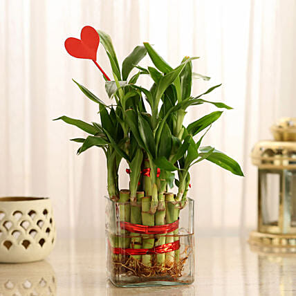 Two Layer Lucky Bamboo With Heart Shaped Tag: Valentines Day Lucky Bamboo