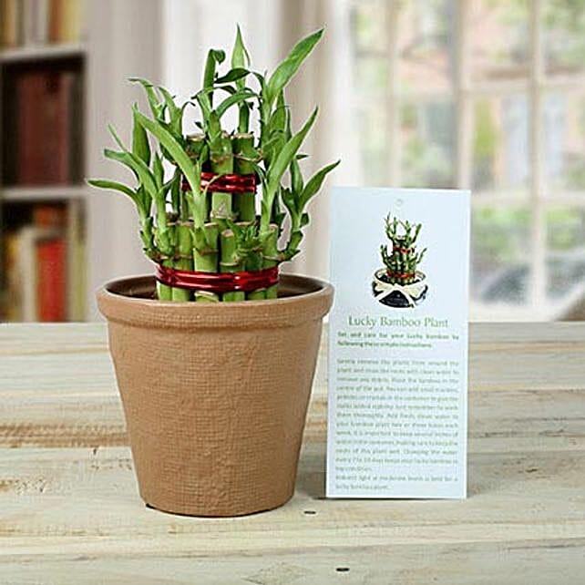 2 Layers Luck Bamboo Plant: Send Home Decor to Delhi