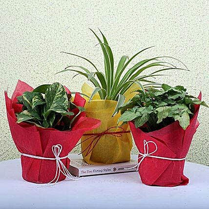 3 Green House Plants: Home Decor