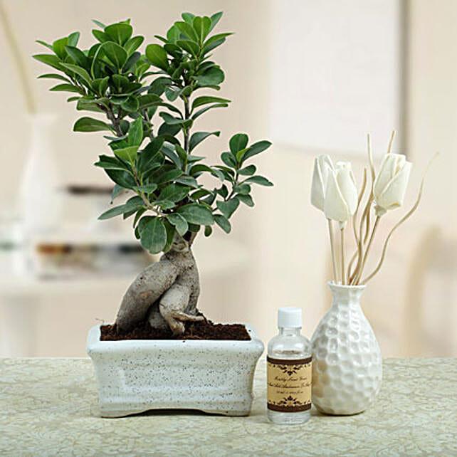 Bonsai N Oil Diffuser: Plant Combos
