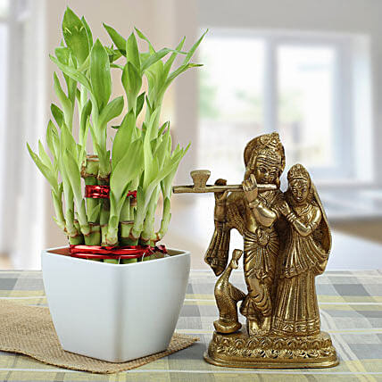 Eternal Bond: Buy Indoor Plants