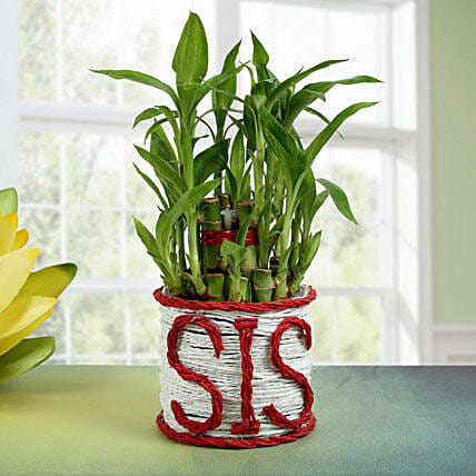 Lucky Bamboo For Sister: Gifts for Sister