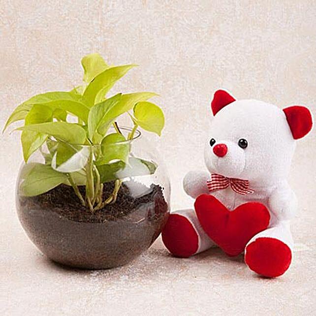 Money Plant Terrarium N Cute Teddy Combo: Money Tree