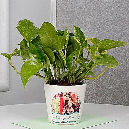 Mothers Day Special Money Plant: Personalised Pot plants