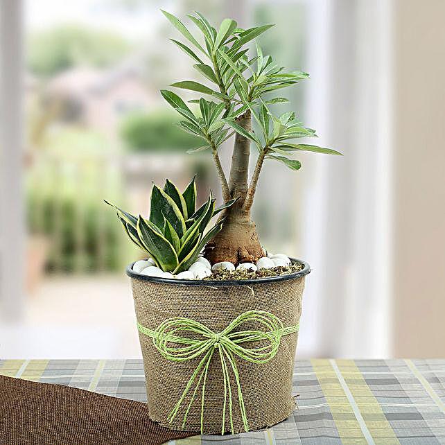 Green Home Decor Dish Garden: Spiritual Plant