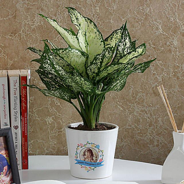 Gorgeous Silver Aglaonema Plant: