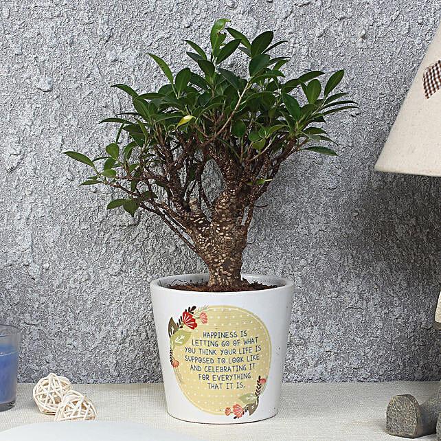 Ficus Bonsai Plant in Printed Pot: Tropical Plants