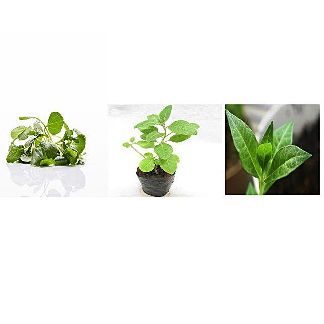 Water Cress Ashwagandha & Mehendi Seeds Combo: