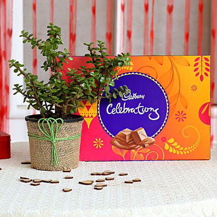 Jade Plant & Cadbury Celebrations Combo: