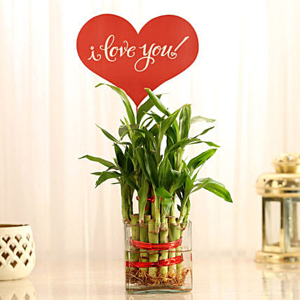 Two Layer Lucky Bamboo With I Love You Tag: Plants for anniversary