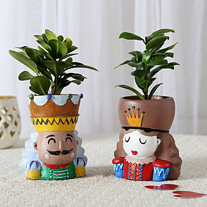 Set of 2 Ficus Compacta In King Queen Pots: Home Decor