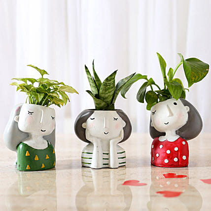 Set of 3 Air Purifying Plants In Raisin Pots: Plants Delivery