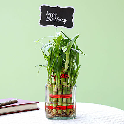 2 Layer Bamboo Plant For Happy Birthday: Send Good Luck Plants