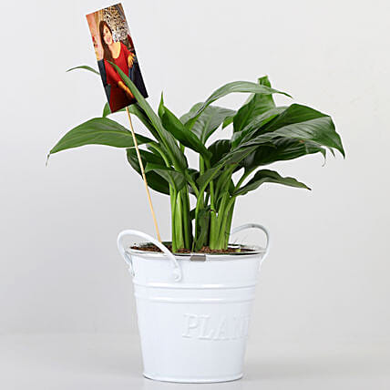 Peace lily Plant With Your Personalised Picture: Air Purifying Plants