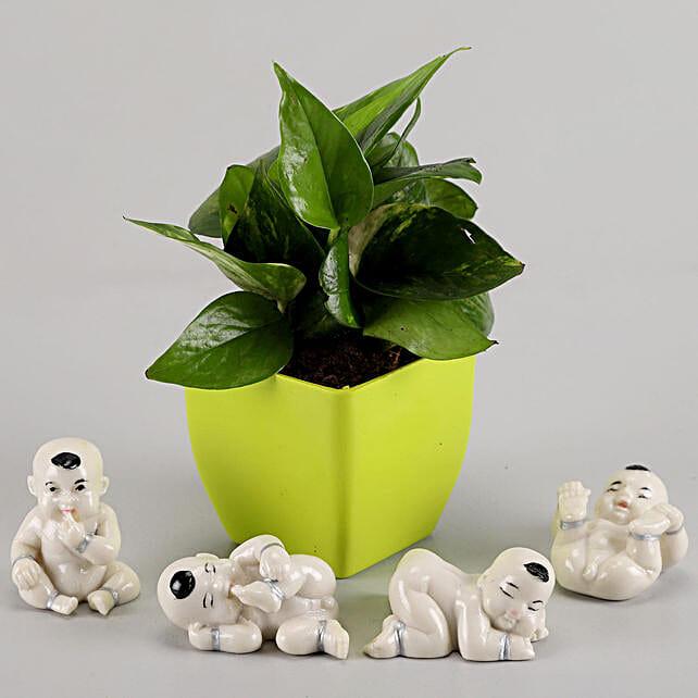 Money Plant in Green Pot & Baby Buddha Combo: Money Tree