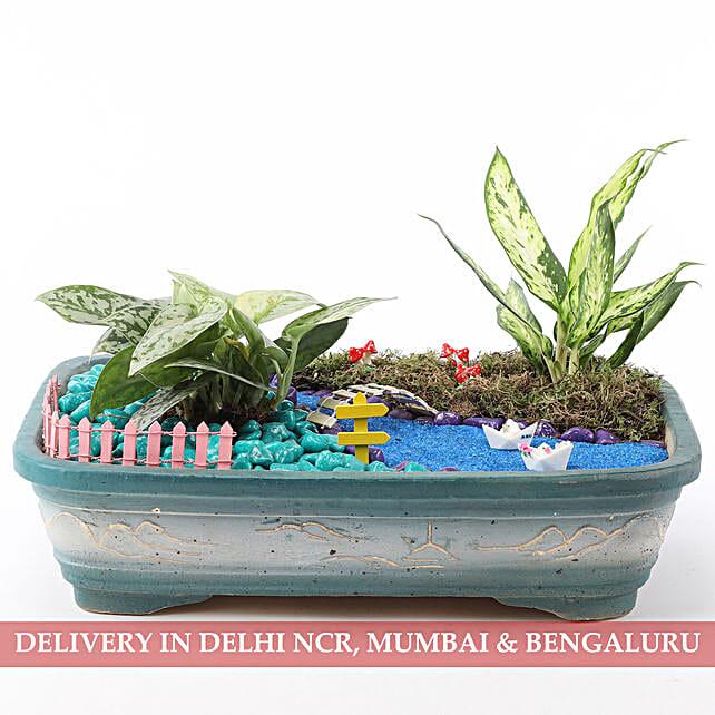 Exotic Plants Dish Garden: Dish Gardens