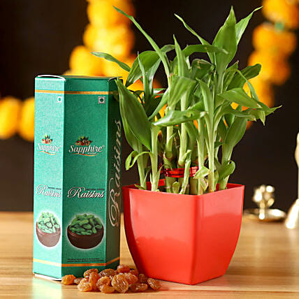 2 Layer Lucky Bamboo With Raisins: Lucky Bamboo for Him
