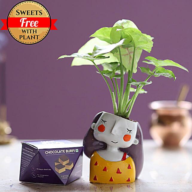 Chocolate Burfi & Syngonium Plant: Ornamental Plant Gifts