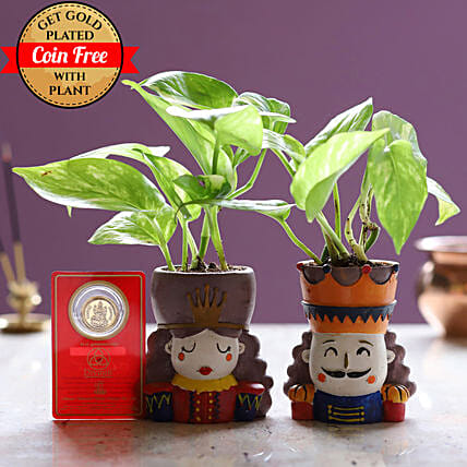 King Queen Money Plant Set & Free Gold Plated Coin: