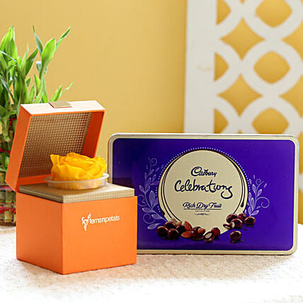 Yellow Forever Rose & Cadbury Dry Fruit Collection: Send Flowers and Chocolates