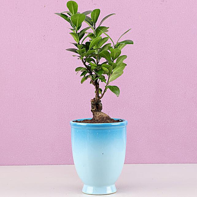 Ficus Bonsai Plant in Blue Ombre Venetian Vase: Bonsai Plants