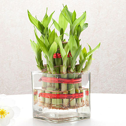 Bringing Good Luck 2 Layer Bamboo: Desktop Plants