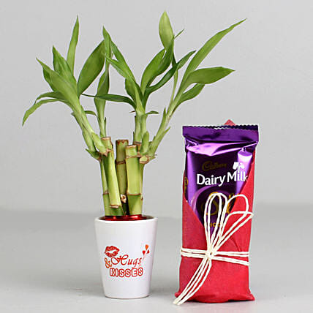Bamboo Plant In Hugs & Kisses Pot & Dairy Milk Silk: Cadbury Chocolates