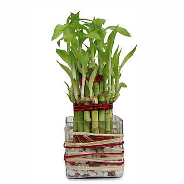 Good Luck Bamboo: Send Gift for Her in Dubai