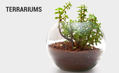 terrariums-desk-17-feb-2019.jpg