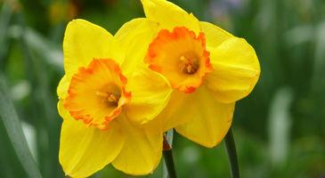 Flowers Meanings: Types of Flowers - Ferns N Petals on meaning in urdu, meaning in french, meaning in spanish,