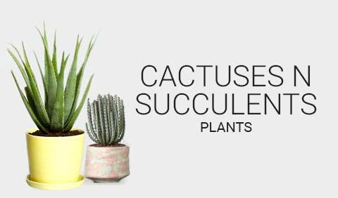 Cactuses & Succulents Plants