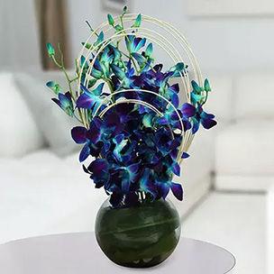 Buy Orchids Online UAE