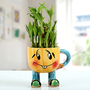 Indoor Plants Online in UAE