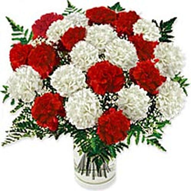 Carnation Fascination Gre