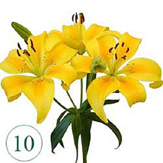 10 Blooms of Yellow Lilies KU