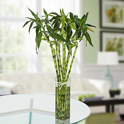 11 Spiral Bamboo Plant Gift Spiral Bamboo Plant In A Glass Vase
