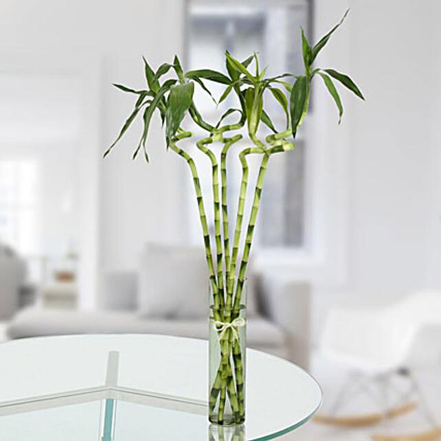 5 Spiral Bamboo Stick