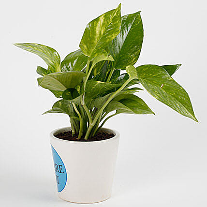 Money Plant For Dad
