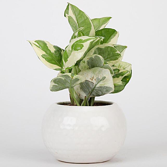White Ceramic Designer Pot