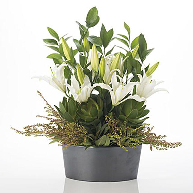 Harmonious Lilies